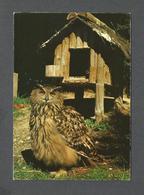 ANIMALS - ANIMAUX - ROYAL EAGLE OWL - AIGLE - ZOO DE LA CASA DE CAMPO MADRID - PHOTO MARIA J. CARRASCO - Oiseaux