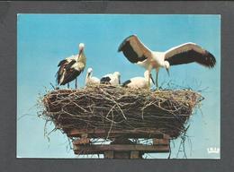 ANIMALS - ANIMAUX - BIRDS - OISEAUX - NID DE CIGOGNES À MUTTERSHOLTZ - ÉDITIONS LA CIGOGNE - Oiseaux