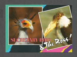 ANIMALS - ANIMAUX - HUMOUR - BIRDS - OISEAUX - SECRETARY BIRD & THE BOSS - MACABOU STORK FROM SOUTHERN AFRICA - Oiseaux