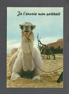 ANIMALS - ANIMAUX - HUMOUR - LAMA - JE T'ENVOIE MON PORTRAIT - PAR COLLECTION ORION - Autres