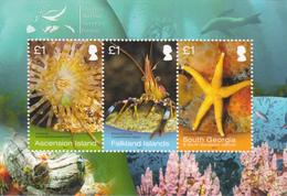 2013 Falkland Islands Marine Life JOINT ISSUE Ascension South Georgia Souvenir Sheet Complete MNH - Falkland