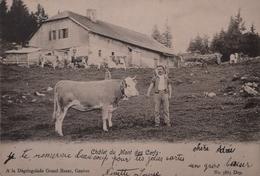 Suisse (VD) Chalet Du Mont Des Cerfs 1904 - VD Vaud