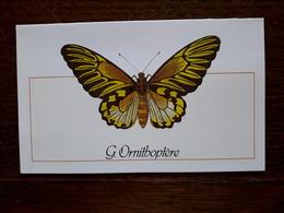 L20/22 Mini Calendrier Publicitaire. 1989 ; Papillon. Nantes. Imprimerie Celtique - Big : 1981-90