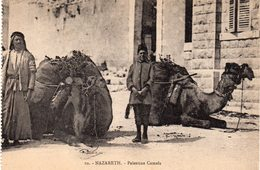 NAZARETH - Palestine Camels - Palestine