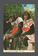 ANIMALS - ANIMAUX - HUMOUR - SINGES - MONKEY - YES IT'S SAME OL'  STUFF IN FLORIDA TOO - BY MONKEY JUNGLE MIAMI - Singes