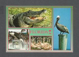 ANIMALS - ANIMAUX - FROM FLORIDA CROCODILE ET OISEAUX ET MARSOUIN - NATURE'S PARADISE - PHOTO BY WERNER J. BERTSCH - Oiseaux