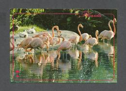 ANIMALS - ANIMAUX - FROM FLORIDA COLORFUL FLAMINGOS CAN BE SEEN IN MANY AREAS OF FLORIDA - PHOTO WERNER J. BERTSCH - Oiseaux