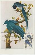 Etats-Unis Carte Maximum Oiseaux 1963 Pies 756 - Cartoline Maximum