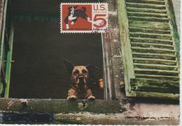 Etats-Unis Carte Maximum Animaux 1966 Chien 802 - Cartoline Maximum