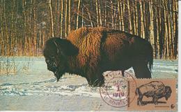 Etats-Unis Carte Maximum Animaux 1970 Bison 895 - Cartoline Maximum