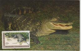 Etats-Unis Carte Maximum Animaux 1971 Alligator 928 - Cartoline Maximum