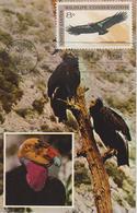 Etats-Unis Carte Maximum Oiseaux 1971 Condor 930 - Cartoline Maximum