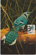 Etats-Unis Carte Maximum Oiseaux 1978 Geai 1209 - Cartoline Maximum