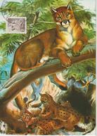 Etats-Unis Carte Maximum Animaux 1981 Puma 1322 - Cartoline Maximum