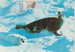 Etats-Unis Carte Maximum Animaux 1981 Phoque 1323 - Cartoline Maximum