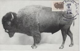Etats-Unis Carte Maximum Animaux 1981 Bison 1324 - Cartoline Maximum