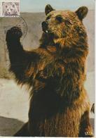 Etats-Unis Carte Maximum Animaux 1981 Ours Brun 1325 - Cartoline Maximum