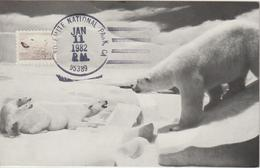 Etats-Unis Carte Maximum Animaux 1981 Ours Blanc 1326 - Cartoline Maximum