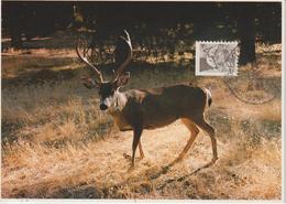 Etats-Unis Carte Maximum Animaux 1981 Cerf 1329 - Cartoline Maximum