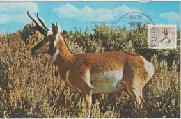 Etats-Unis Carte Maximum Animaux 1981 Antilope 1330 - Cartoline Maximum