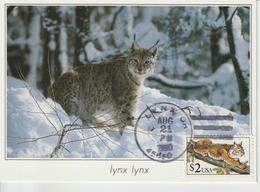 Etats-Unis Carte Maximum Animaux 1990 Lynx 1903 - Cartoline Maximum