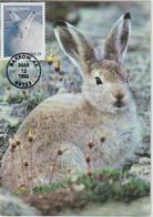 Etats-Unis Carte Maximum Animaux 1999 Lièvre 2858 - Cartoline Maximum