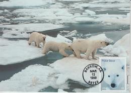 Etats-Unis Carte Maximum Animaux 1999 Ours Blanc 2861 - Cartoline Maximum