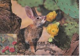 Etats-Unis Carte Maximum 1999 Désert Du Sonora - Cartoline Maximum
