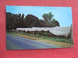 Shade Grown Tobacco   Massachusetts > Northampton  Ref 3315 - Northampton