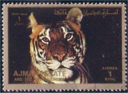 116 Ajman Tigre Tiger Tigger (AJM-131) - Big Cats (cats Of Prey)