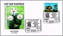 Cactus GYMNOCALYCIUM AMERHAUSERI. Freilassing 2014 - Cactus