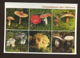 Champignons Des Résineux - Mushrooms