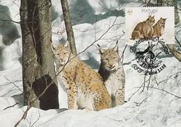 CM - Portugal - Lynx Pardinus (Lynx) De 1988 (Lisbonne) - Cartes-maximum (CM)