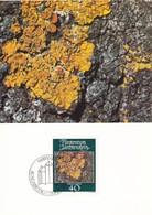 Liechtenstein 1981 Mosses And Lichens Set Of 4 Maximum Cards And Original Envelope - Maximum Cards