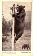 OURS Sur POTEAU TÉLÉGRAPHIQUE / BEAR On TELEGRAPH POLE - DEUTSCHER KNABENKALENDER 1914 (ac111) - Bears