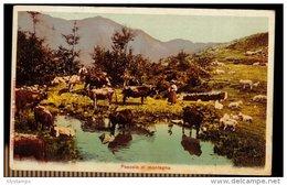 CPA PASCOLO DI MONTAGNA ANIMEE BERGERE ET SES BETES 1909 CAMASCHELLEA & ZANIA EDIT VARALLO - Cartoline