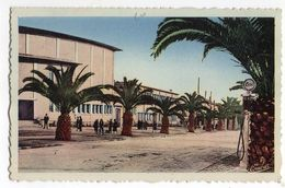 Algérie--SKIKDA--PHILIPPEVILLE---Les Palmiers (petite Animation)  ---carte Colorisée - Skikda (Philippeville)