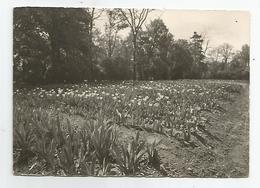 78 - école Th Roussel Champ De Tulipes Cachet écrite De Montesson 1957 - Montesson