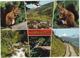 Weltkurort Bad Hofgastein -Tierleben Im Kürpark Auf D. Höhenweg  - (Salzburg, Austria) - Bad Hofgastein