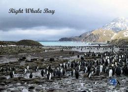 AK Südgeorgien South Georgia Right Whale Bay New Postcard - Ansichtskarten