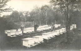 VILLIERS SUR MORIN  CARTE PHOTO  RUCHERS DE M. DEMAUX AUX TERRES BLANCHES - Autres Communes