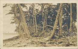 Real Photo Coco Palmes St Croix P. Used  St John Antigua On Leeward Islands Stamp - Isole Vergini Americane