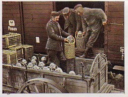 Sammelbild Eckstein-Halpaus Dresden - Der Weltkrieg (1916) - Sommeschlacht - Umladen Schwerer Munition - Nr. 96 (40817) - Zigaretten
