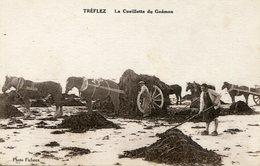 TREFLEZ   **** PECHEURS DE  GOEMON  **** GOEMONIERS **** - Autres Communes