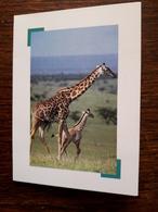 L20/106. Mini Calendrier. 1997. Girafes - Calendriers