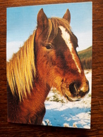 L20/107 Mini Calendrier Publicitaire. 1991. Cheval. Emmerin. Joel Coiffure - Grand Format : 1991-00