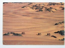Desert Elefants Of The Namib  /   Namibia - Namibia