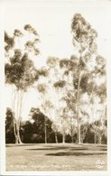 EUCALYPTUS TREES - CALIFORNIA. U.S.A. POSTAL CPA CIRCA 1930's NON CIRCULÉ - LILHU - Estados Unidos