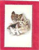TROIS JOLIS CHATONS . Edt DERIAR . Printed In SWITZERLAND . CARTE NON ECRITE - Katten