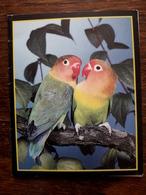L19/118 Mini Calendrier Publicitaire. 1989. Oiseaux Inséparables. Treillieres; Menuiserie Aluminium - Calendars